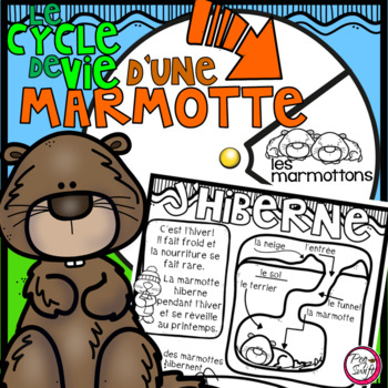 Le cycle de vie d'une marmotte - FRENCH Life Cycle Spinner & Labeling