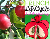 Le cycle de vie d'une pomme - FRENCH Life Cycle Craft