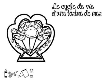 Le cycle de vie d'une tortue de mer - FRENCH Life Cycle Craft