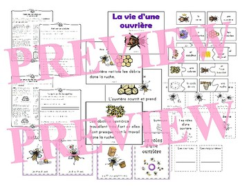 Le cycle de vie de l'abeille - French Bees (life cycle, literacy and science)