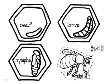 Le cycle de vie des abeilles - FRENCH Life Cycle Craft