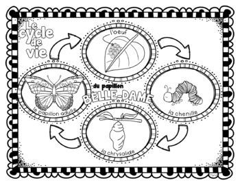 Le cycle de vie du papillon belle-dame