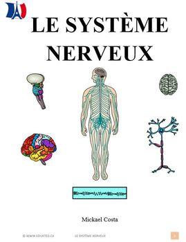 Le système nerveux (#49)