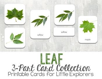 Leaf 3-Part Montessori-Inspired Card Set