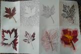 Leaf Accordian Books/8 Art Processes with a Leaf