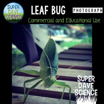 Leaf Bug Insect Camouflage Photograph