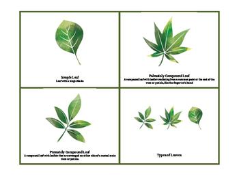 Leaf Characteristics