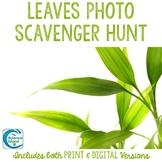 Leaf Characteristics Photo Scavenger Hunt (Distance Learning)