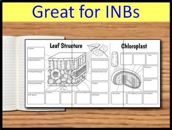 Leaf & Chloroplast Foldable - Big Foldable for Interactive Notebooks or Binders