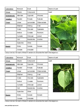 Leaf Classification 2