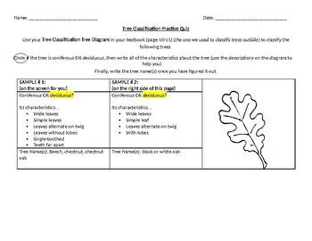 Leaf Classification Practice Quiz