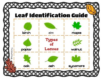 Leaf Collection Project Book