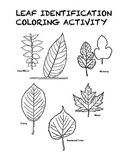 Leaf Coloring Activity