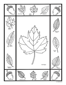 Leaf Coloring Pages