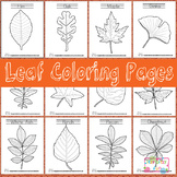 Leaf Coloring Pages - Leaf Activites