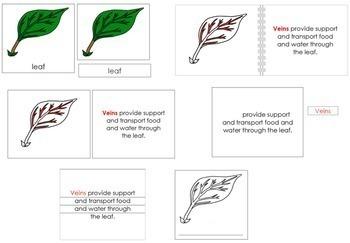 Leaf Definition Set - Red