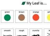 Leaf Description activity