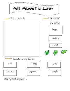 leaf exploration worksheet by amanda mooney teachers pay teachers. Black Bedroom Furniture Sets. Home Design Ideas