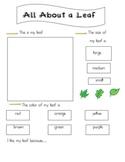 Leaf Exploration Worksheet