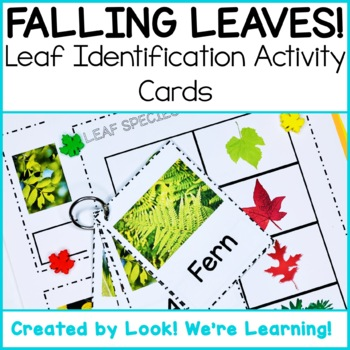 Leaf Identification Flashcards - Falling Leaves!