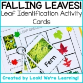 Fall Science Centers: Leaf Identification Flashcards - Falling Leaves!
