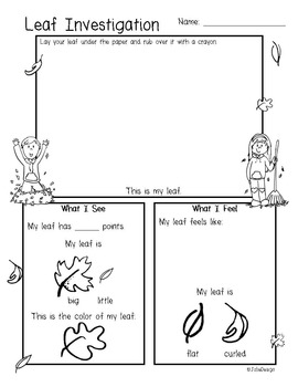 Leaf Investigation Pre-K Fall Science Worksheet by JolieDesign | TpT