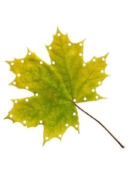 Leaf Lacing FREEBIE