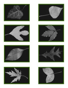 """Leaf Match"" Color to Black n White for Autism"