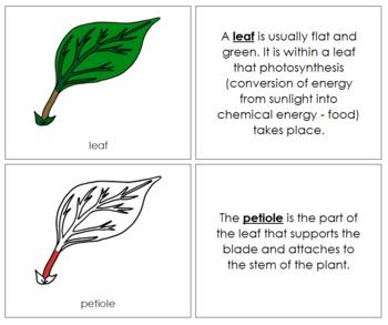 Leaf Nomenclature Book (Red)