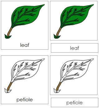 Leaf Nomenclature Cards