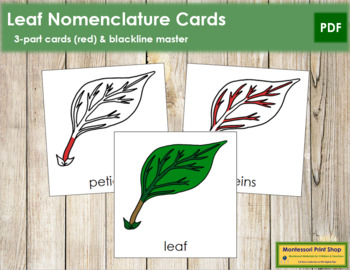 Leaf Nomenclature Cards (Red)