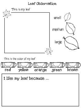 Leaf Observation