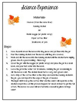 Exploring Leaves / Science Experiment