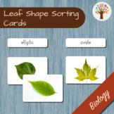 Leaf Shape Montessori Sorting Cards
