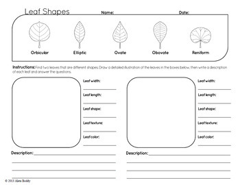 Leaf Shape Worksheet and Poster  FREE   by Dean Science   TpT likewise four kinds of sentences worksheets – slaterengineering together with Food from Plants   Roots as Vegetables   Leaves as Food   Stems as besides Native Trees in addition  further Trees additionally  additionally KS1 Science Deciduous and Evergreen Trees Through Seasons Worksheet additionally Science   Leaf   structure  its functions and modifications   Hindi moreover Fall Leaf Pre Printables   Pre Mom besides 2nd grade science worksheets For Practice PDF further Types of plants practice sheets for science grade 2 CBSE as well Related Post Science Worksheets For Grade 4 Marvelous 3 Energy Kids likewise From A Seed To Plant March Worksheets Plants Parts Of Worksheet 3rd also Trees likewise Leaves and Leaf Anatomy   EnchantedLearning. on different types of leaves worksheet