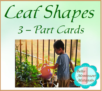 Leaf Shapes - Montessori 3 Part Reading Classification Cards