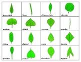 Leaf Shapes and Leaf Margins:  Mini Matching Cards