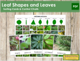 Leaf Shapes and Leaves