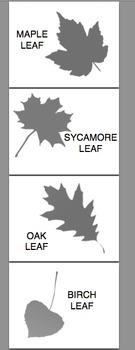 Leaf Sort Activity