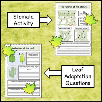 Leaf Structure Lesson Booklet