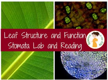 Leaf Structure Stomata Lab