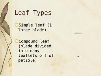 Leaf Structure PowerPoint