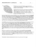 Leaf Structure Worksheet