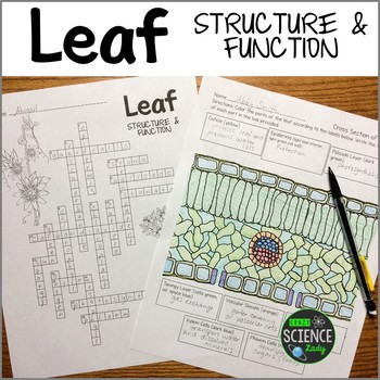 Leaf Structure and Function: Crossword and Coloring