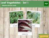 Leaf Vegetable Picture Cards (Set 1)