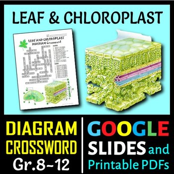 Leaf and Chloroplast Crossword with Diagram {Editable}