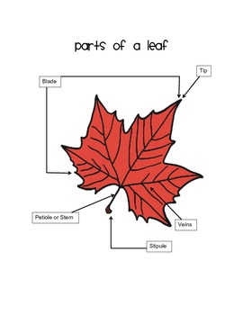 Leaf parts with labels
