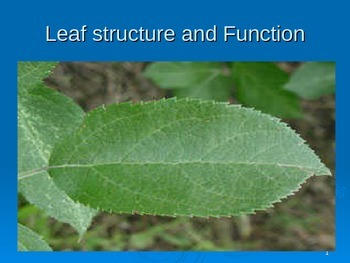 Leaf structure and Function