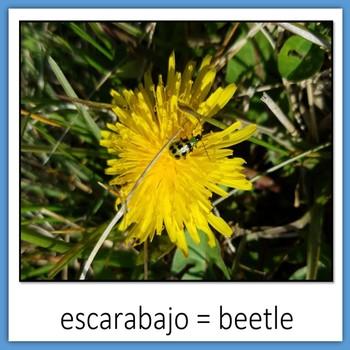 Learn Wildlife Words in Spanish, Book 1