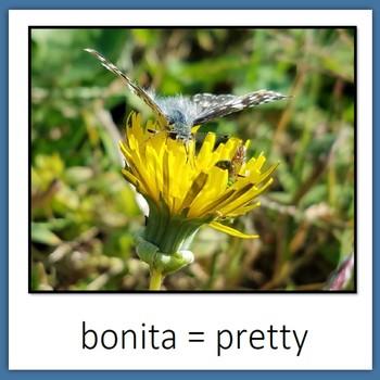 Learn Wildlife Words in Spanish, Book 2